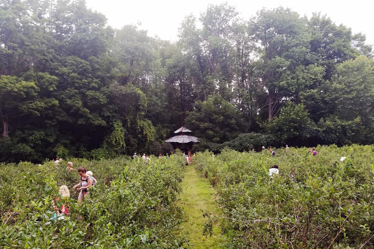 Blueberry-Treehouse-Farm.jpg