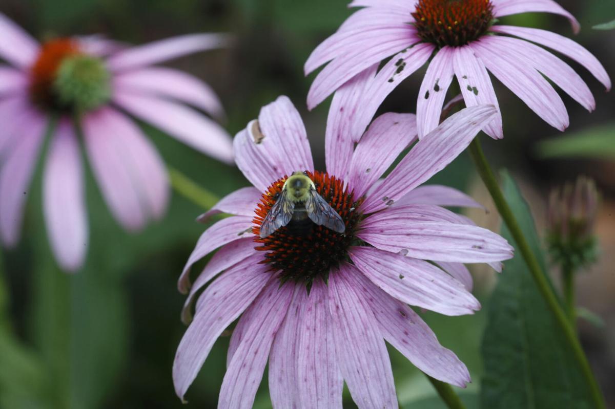 Favorite of bees