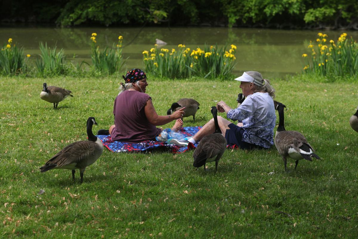 Feathered friends (copy) Ellicott Creek Park