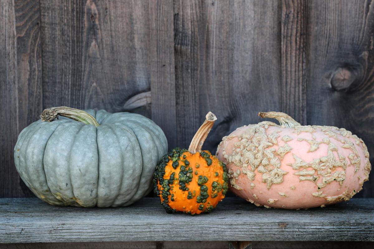 A trio of wacky pumpkins