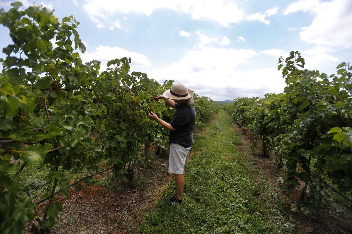 Johnson Estate Winery Jennifer Johnson