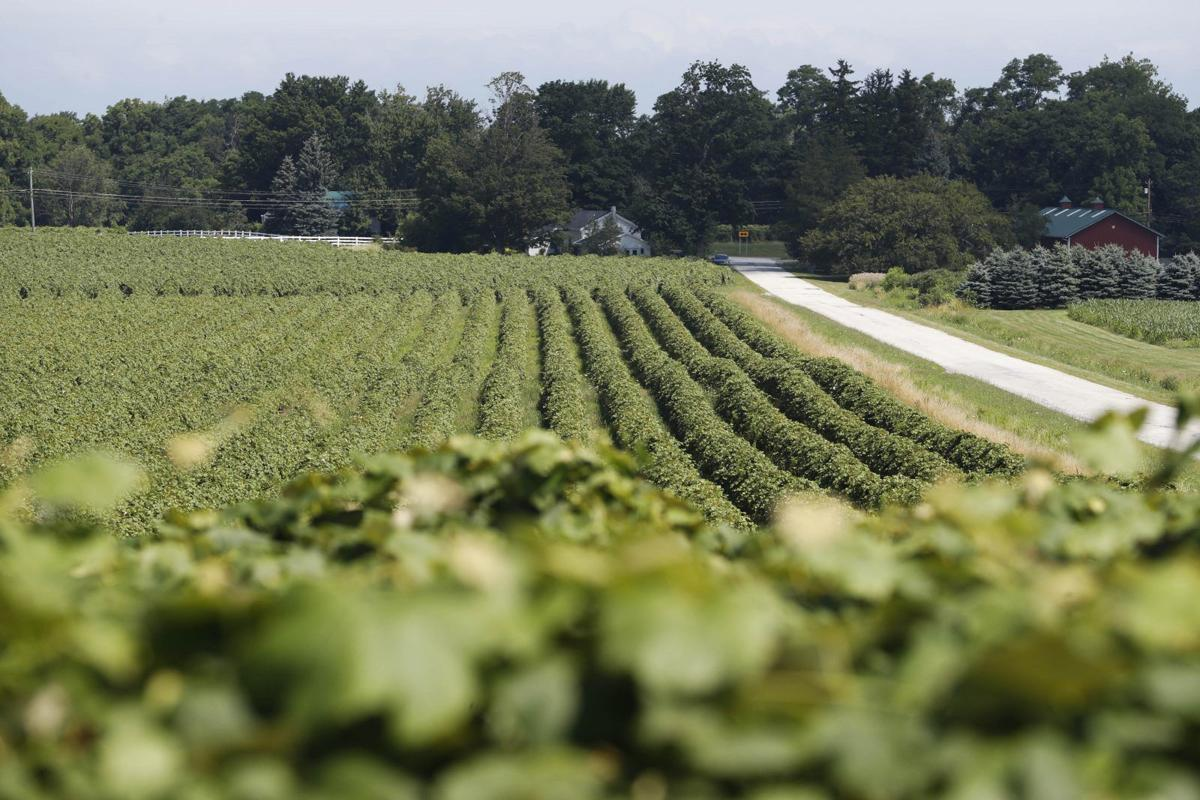 LOCAL grapes CANTILLON