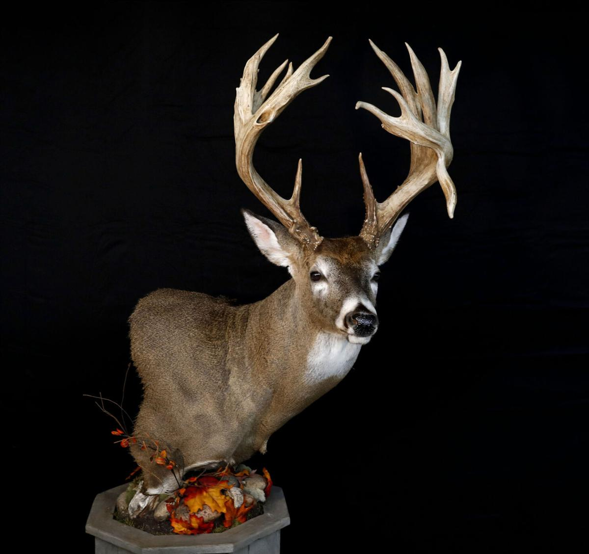 Record buck mounting