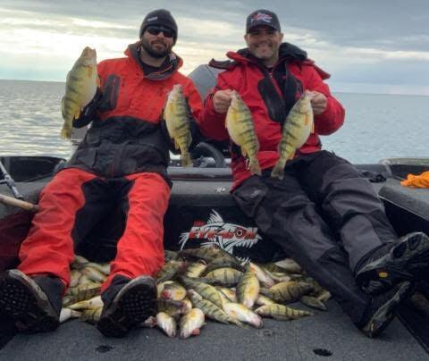 Lake Erie yellow perch