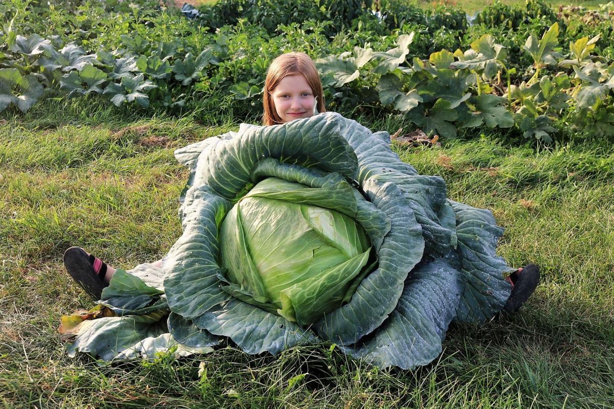 Kara Hassenfratz and cabbage