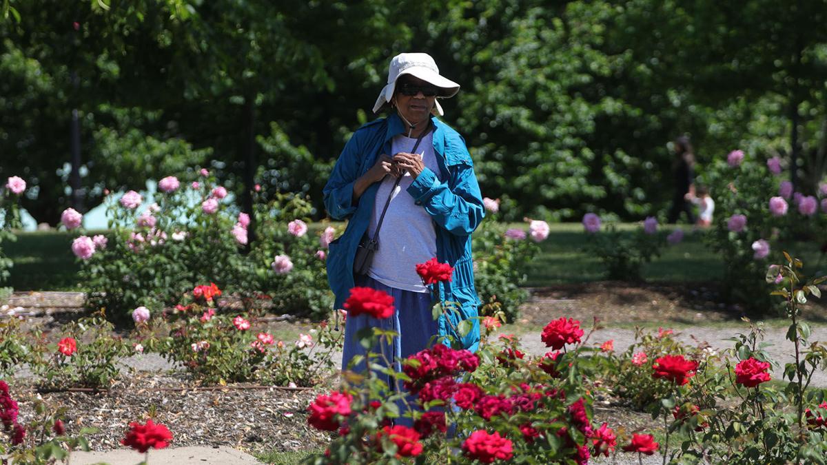 Bell Delaware Park Rose Garden