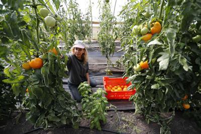 LOCAL URBAN FARMS