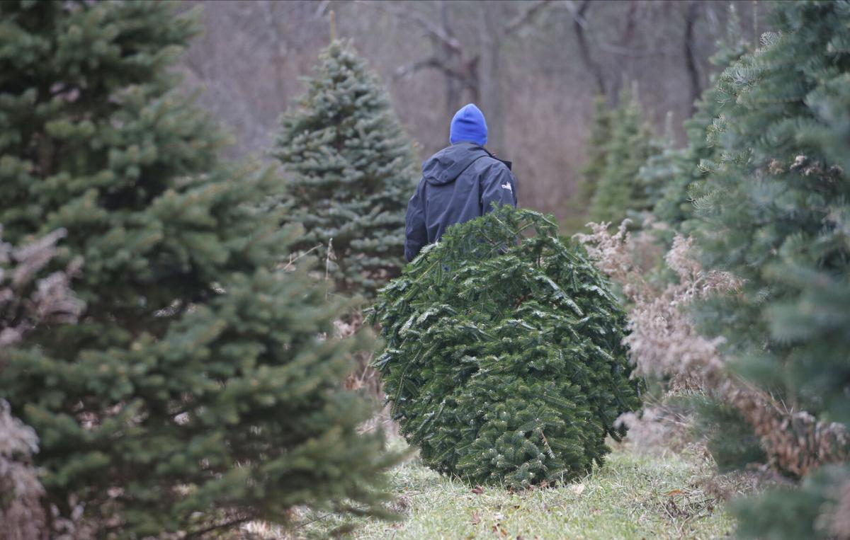 Visit these Christmas tree farms to cut your own or pick your perfect tree   Entertainment ...