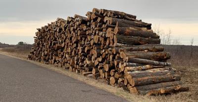 Timber bids.jpg