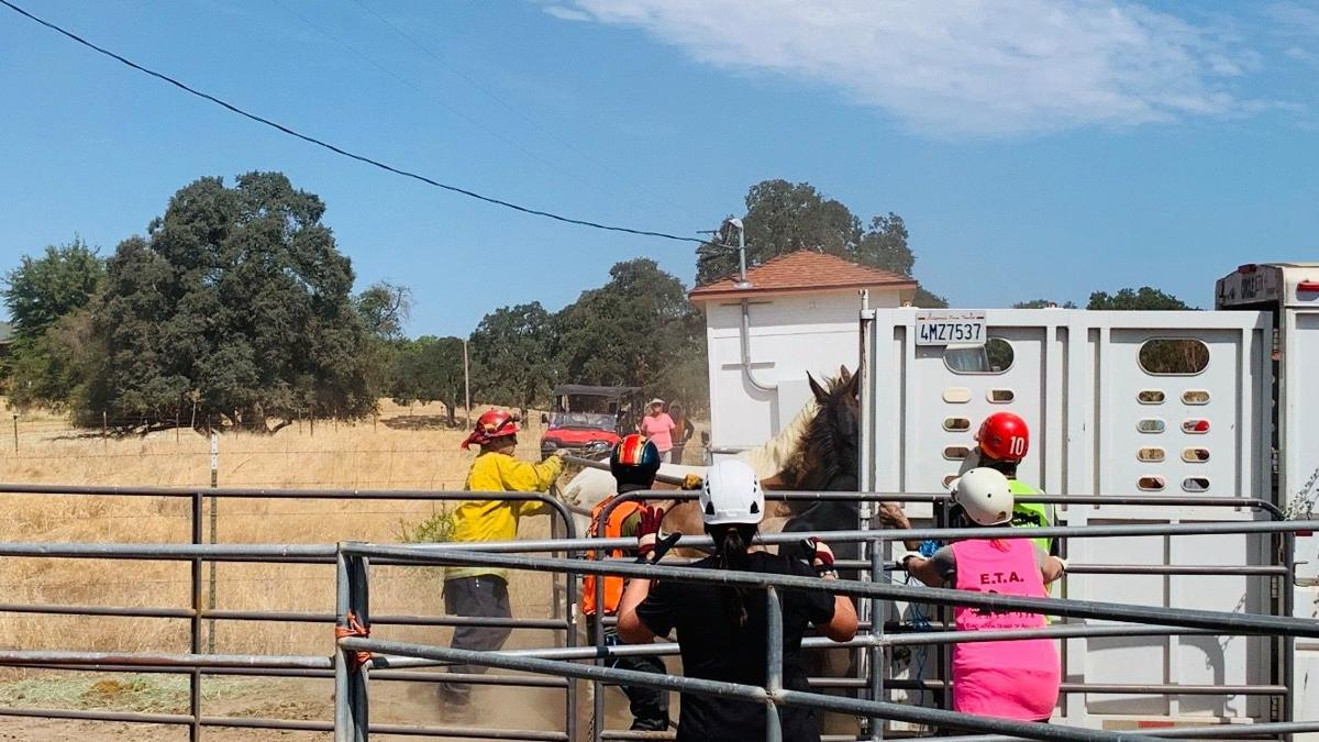 Animal Control Seizes Approximately 60 Horses Donkeys Mules Calaveras County S Most Trusted