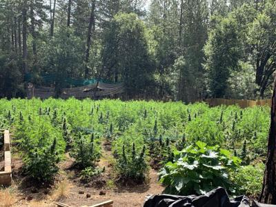 How prepared is Calaveras County for illegal cannabis cultivation?