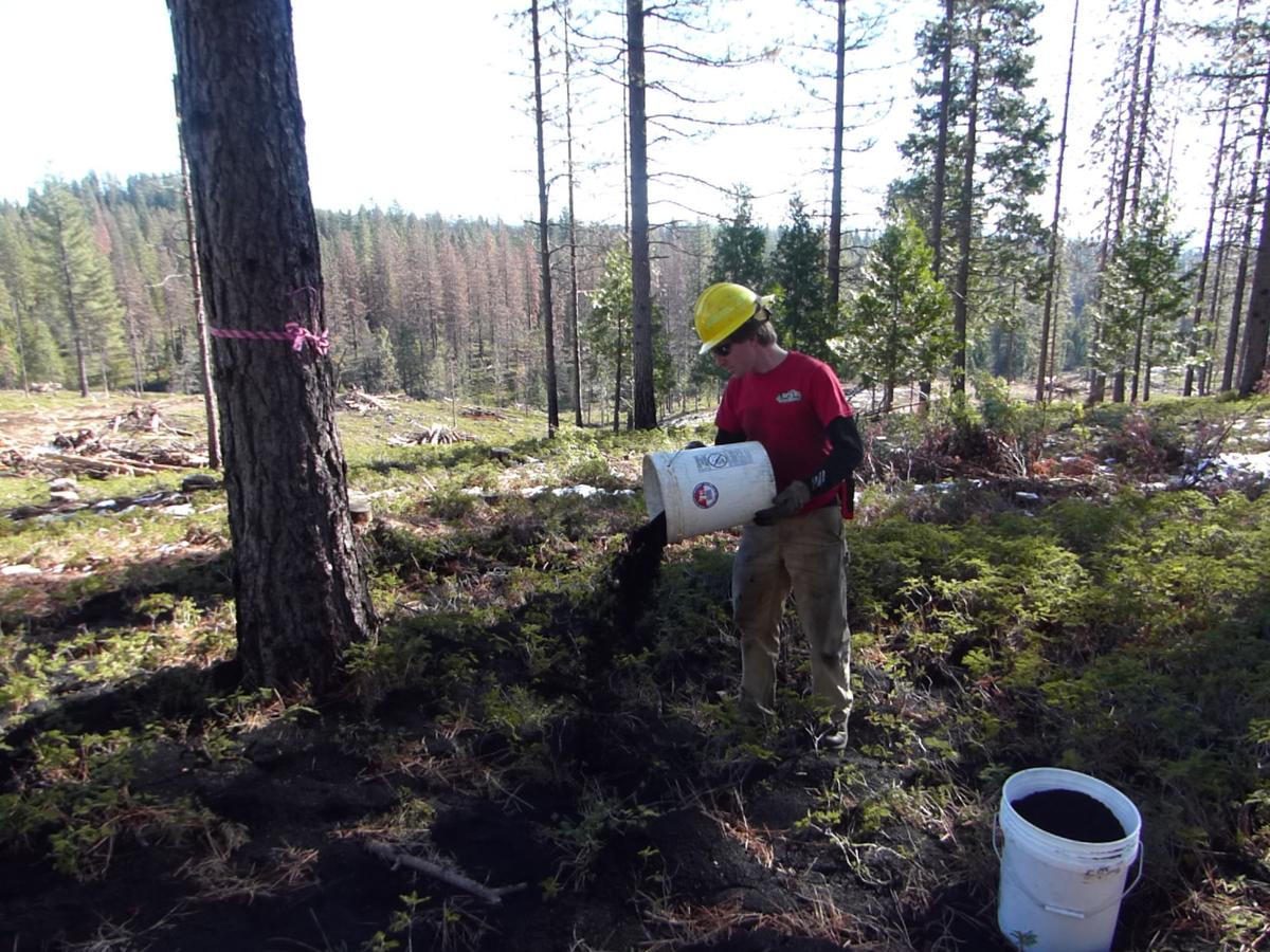 World biochar headlines 12 2017biochar projectbiochar australia curtis kvamme a soil scientist at the stanislaus national forest pours biochar next to a tree near arnold the united states forest service is scattering fandeluxe Gallery
