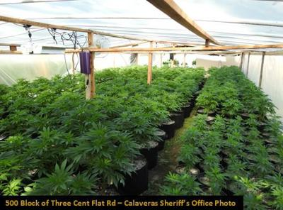 Early May cannabis busts yield 3,800 plants, two citations