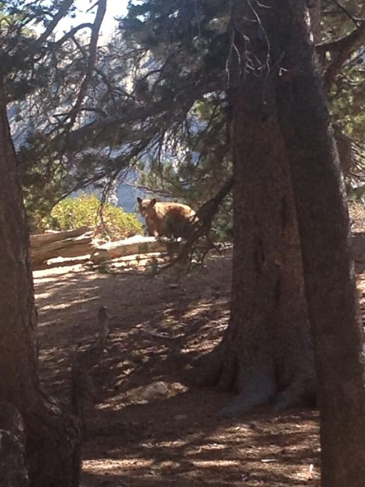 Prepare for bears, spectacular views on Mother Lode hikes