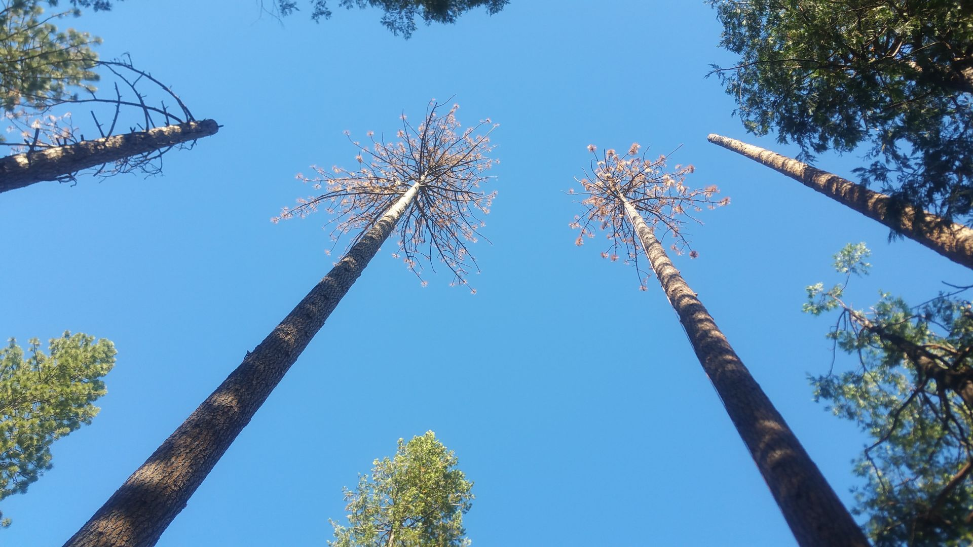 Bark beetles attacked the cottages of the president and prime minister of Russia 04.08.2012 17