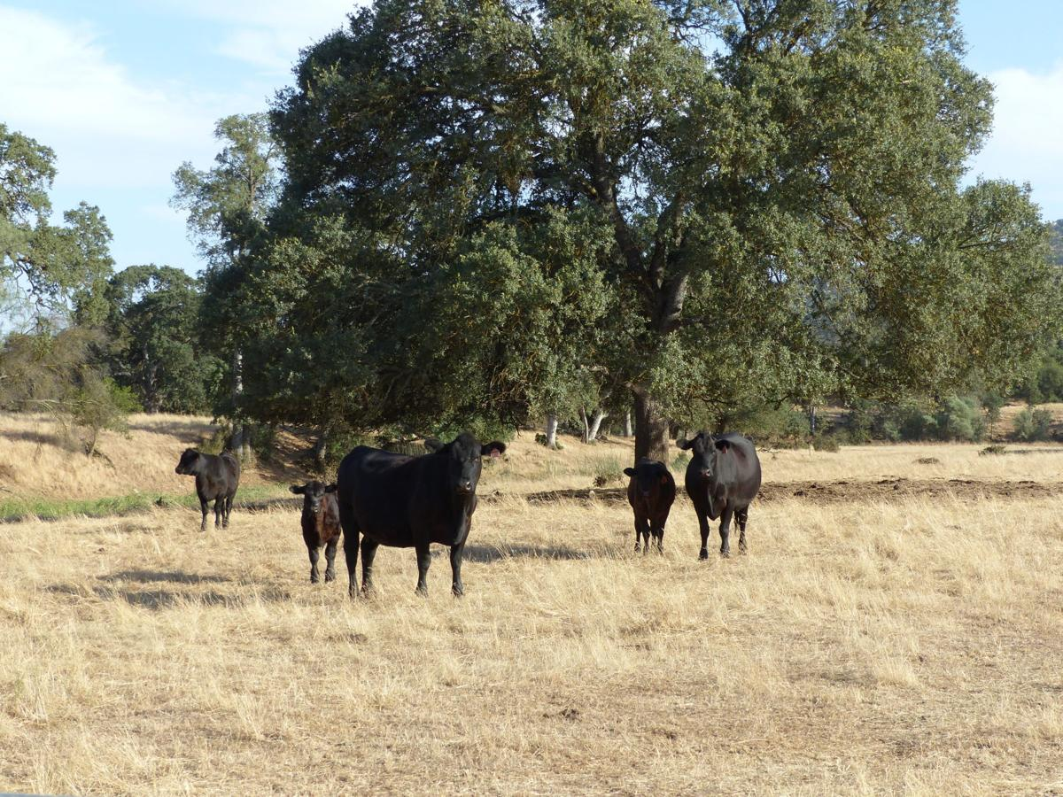 A win for ranching