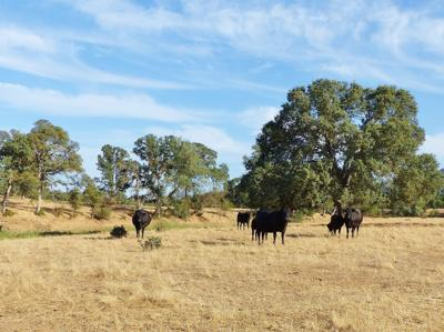 State pays $5.8 million to Copper ranch conservation