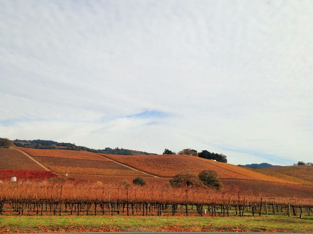 Amador In Action: Amador grapes strike a chord in Sonoma