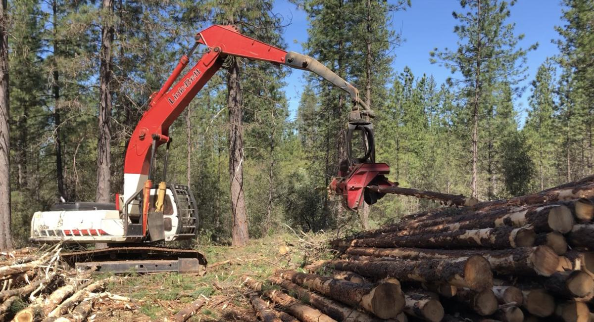 Forest-thinning project near Glencoe breaks ground