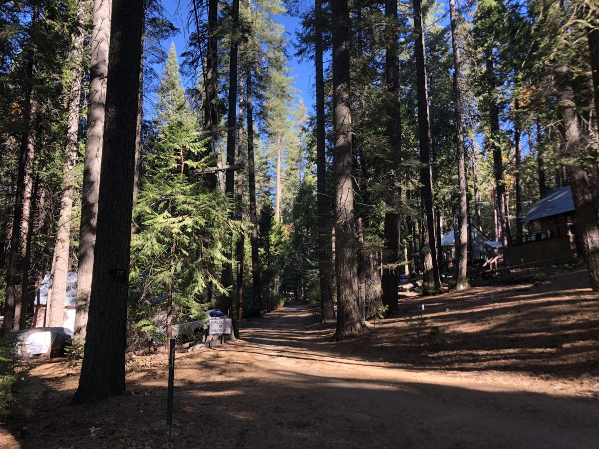 Historic cabin lane threatened by PG&E tree removals