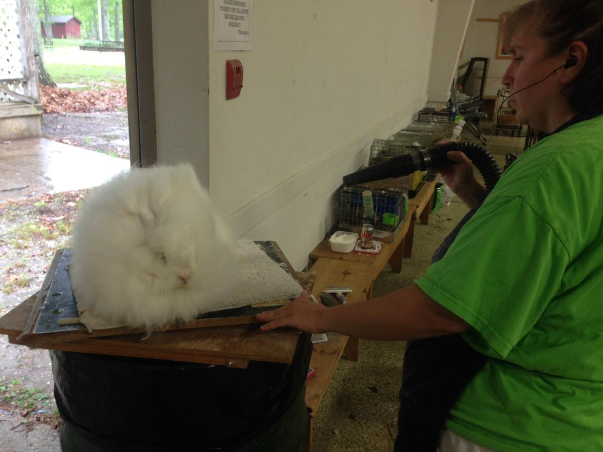 Pitchforks & Buckets 4-H Club Hosts Cape Rabbit Show May 19