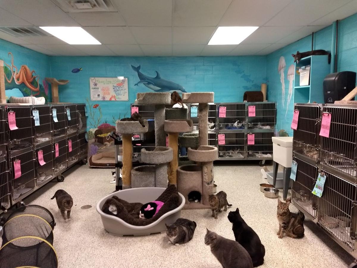 Main Cat Room.jpg