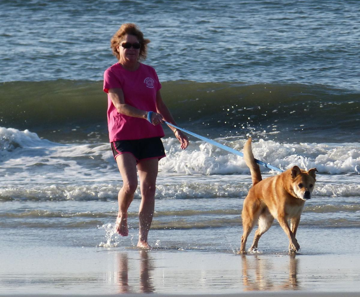wildwood dog beach to relocate location announced pets animals