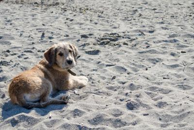 Lower Township Advises Residents of Beach and Bay Regulations for Dog Owners