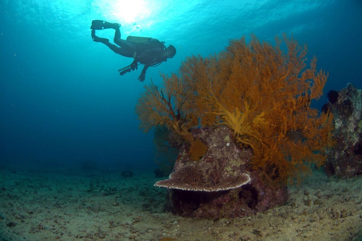 Diver (1).jpg