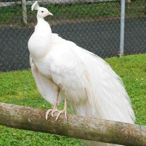 Plan Your Visit to the Cape May County Zoo