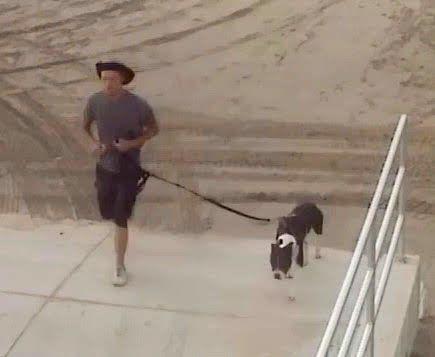 Wildwood Police Seek ID on Owner of Dog that Bit Child