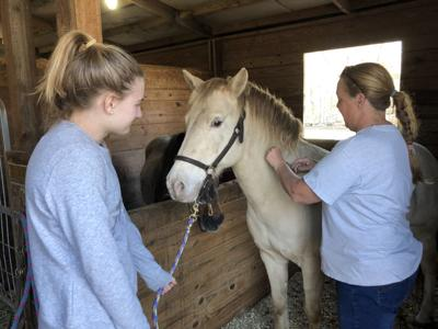 4-H Spring Equine Health Clinic Vaccinated 132 Horses, Mules