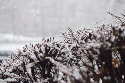winter landscaping option 1.jpg
