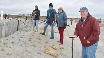 Avalon Volunteers, Students Participate in Annual Dune Grass