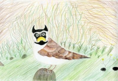 Dennis Elementary Student Places First in Wildlife Foundation's Art and Essay Contest