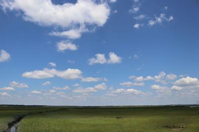 OC Wetland 1.jpg