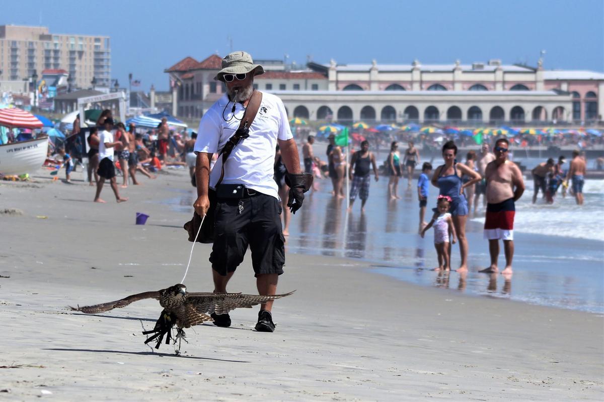 Seagull Program: Did it Work?