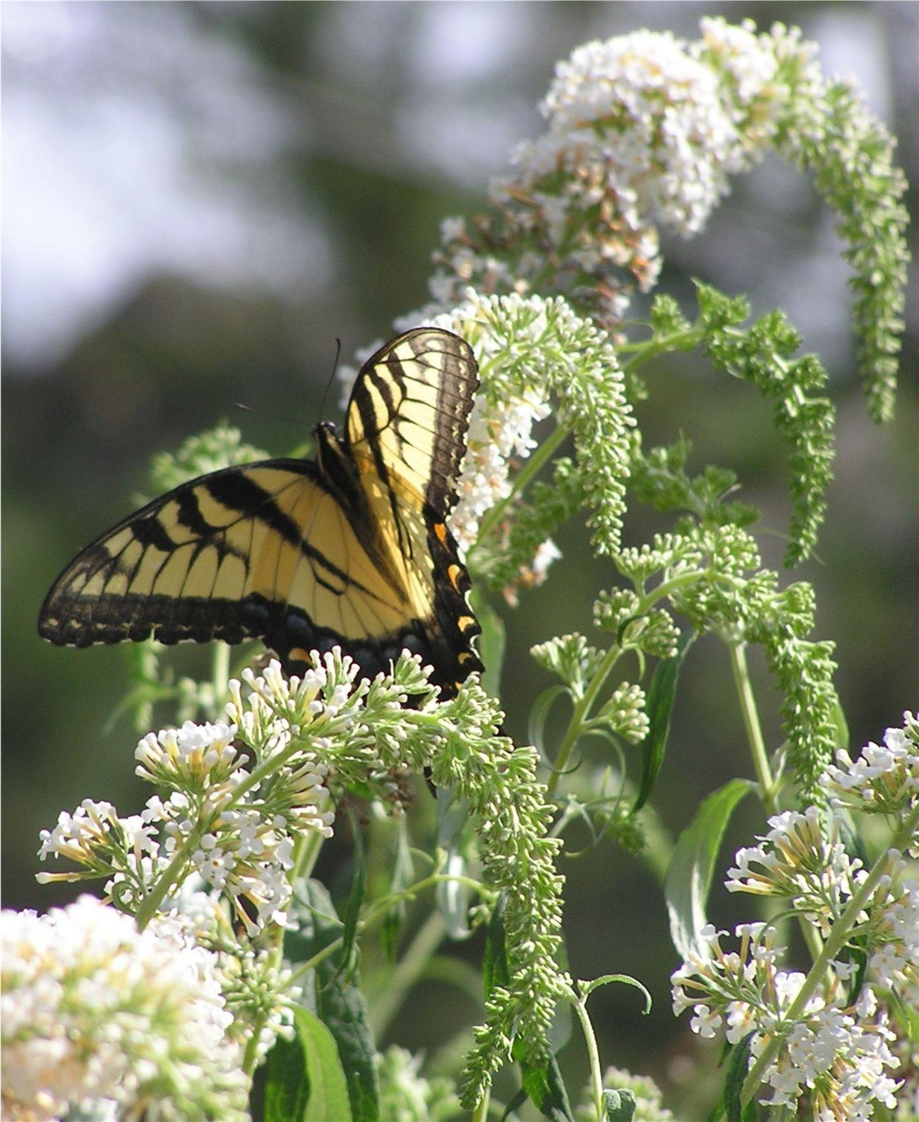 Butterfly Garden Tours Set To Begin