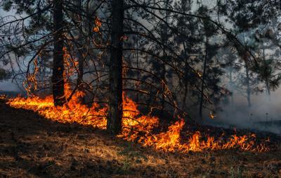 Wildfire - Shutterstock Option 1.jpg
