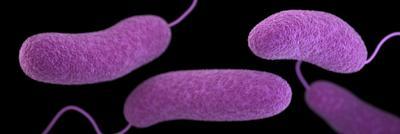 Beware of Bacteria as Water Warms
