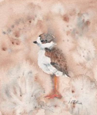 nature 06.28 (piping plover chick)