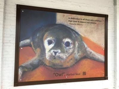 Owls Head Seal