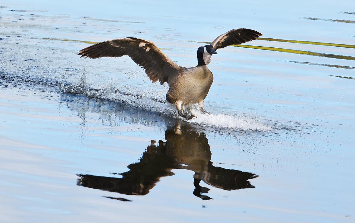 A Day On Shawme Lake
