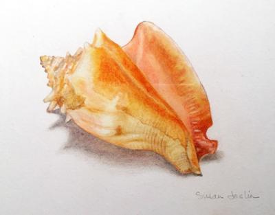 WHHM Shell Study