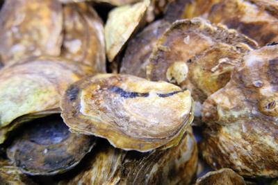 Oysters At Falmouth Fish Market