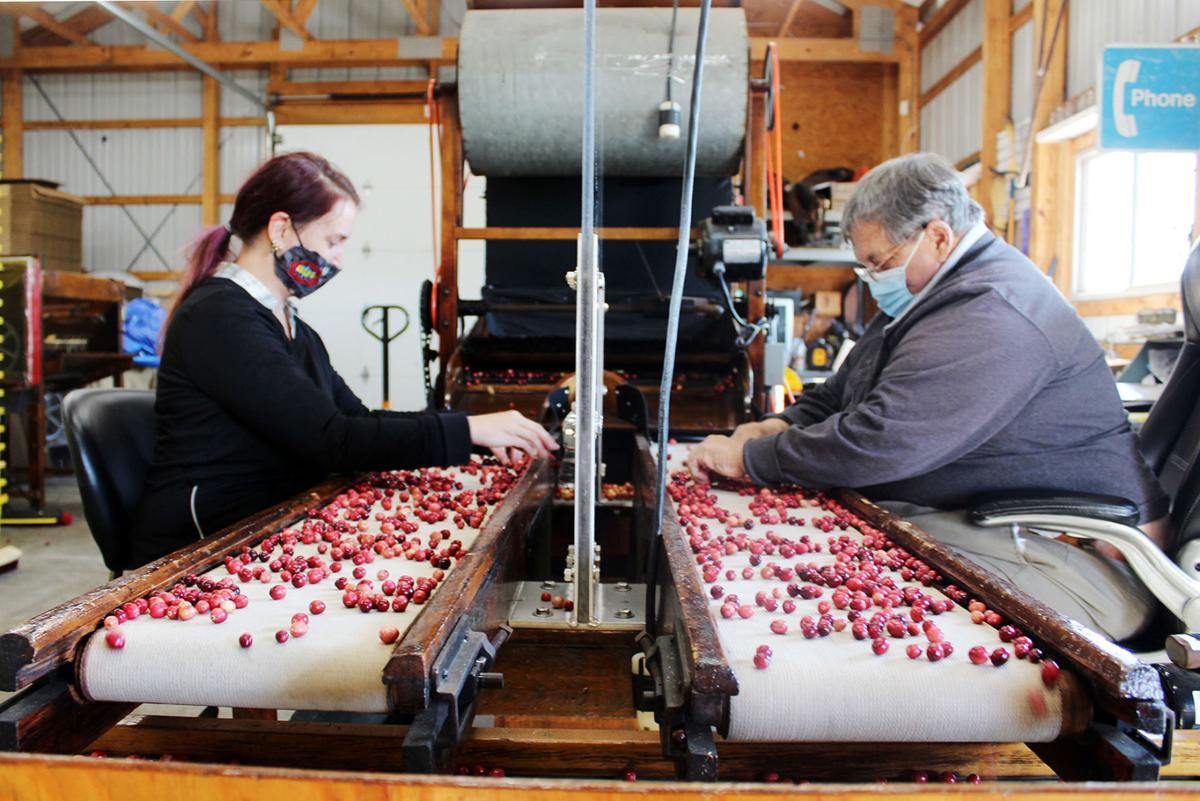 Dry Cranberry Sorting