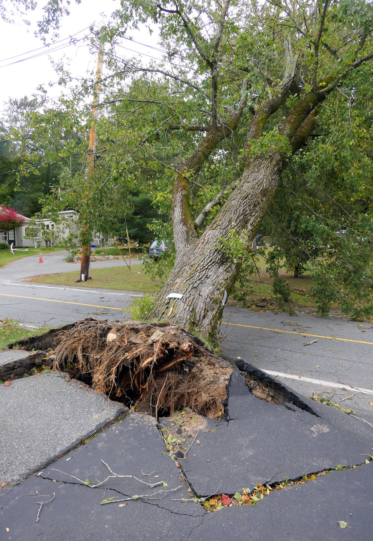 High Winds Cause Damage In Falmouth