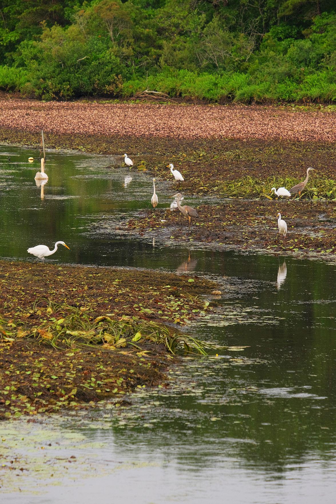 Red Brook Road Pond
