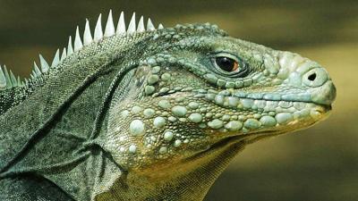 CCMNH reptiles (1)