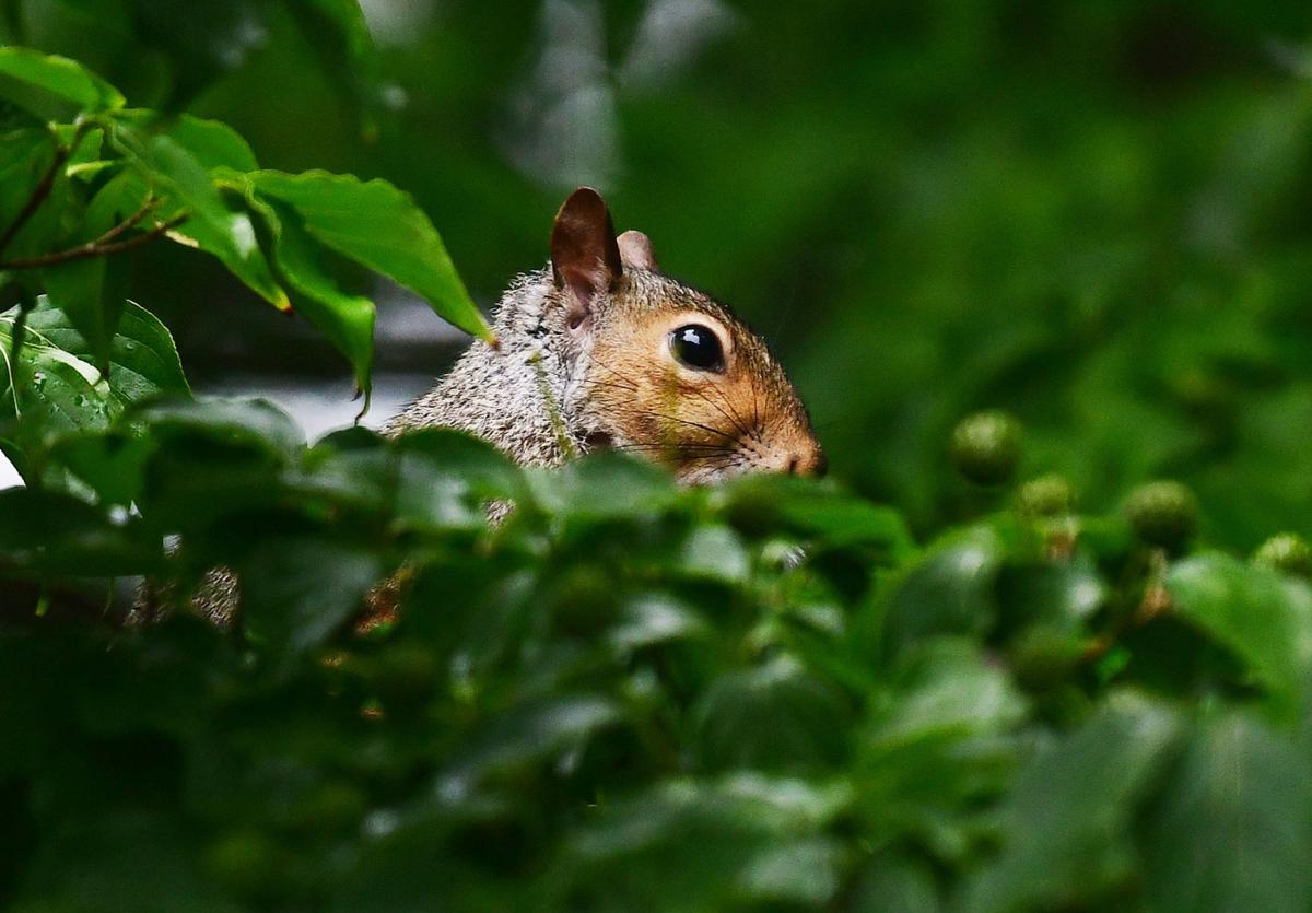 Squirreling Away